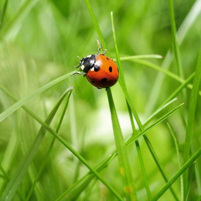 appliquer la permaculture dans votre jardin