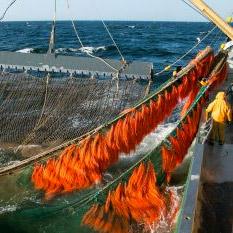 Les filets de pêche polluent nos océans.